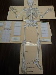 Why Is Anatomy And Physiology Important Best 25 Skeletal System Activities Ideas Only On Pinterest