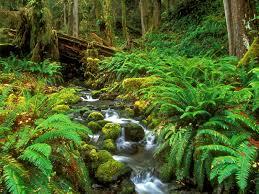 Oregon scenery images Oregon scenery vs washington scenery school living in parks jpg