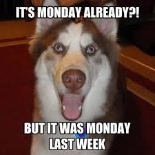 Monday Meme Images - 11 marvelous meme monday dog memes petcentric by purina