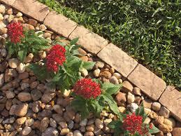 garden design garden design with how to install plastic landscape