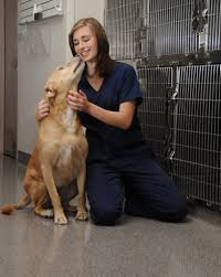what is the best kennel flooring