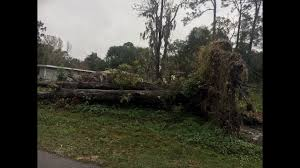 jacksonville wants city to remove 20 foot tree that fell