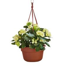 Modern Hanging Planters by Hanging Planters You U0027ll Love Wayfair