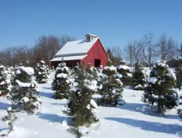 7 places to buy a christmas tree in kansas city go green tree