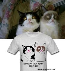 Tard The Grumpy Cat Meme - pokey tard tee grumpy cat know your meme