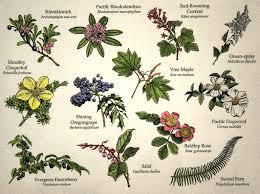 Identify Flowers - wild flowers
