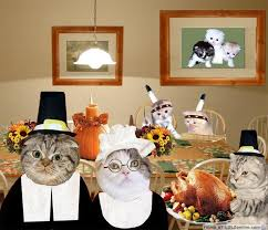 thanksgiving with the cats
