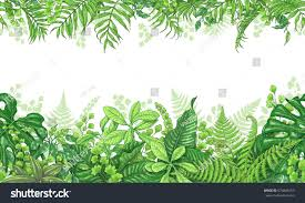 Tropical Plants Pictures - hand drawn branches leaves tropical plants stock vector 674848153