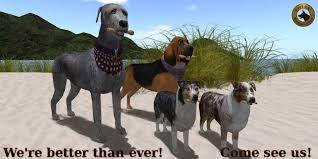 australian shepherd kennel club australian shepherd makeover virtual kennel club of second life