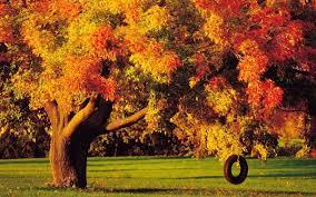 imagenes de otoño para fondo de escritorio fondos de pantalla para otoño wallpapers wallpapers