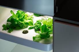 les herbes de cuisine vegidair the herb garden in your kitchen by vegidair kickstarter