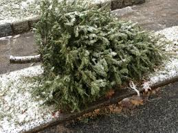 2017 christmas tree pickup in maplewood and south orange the