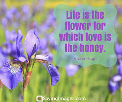 Flower And Love Quotes - flower quote flowers pinterest beautiful flowers and flower
