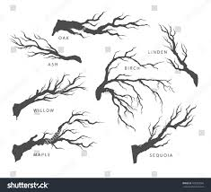 set dried branches trees their names stock vector 420350503