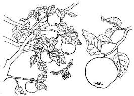 apple tree coloring pages a boy and his apple tree colouring page a boy and his apple tree