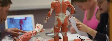 Cuny Anatomy And Physiology Courses By College U2013 Summer In The City