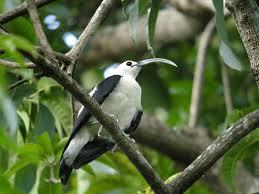 madagascar native plants list of birds of madagascar wikipedia