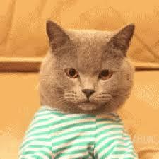 Keyboard Cat Meme - keyboard cat gif redo black cat interactive