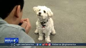 technology creating more innovative pet care gadgets cgtn america