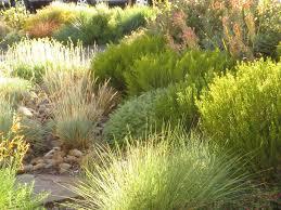 native plant nursery portland oregon chickadee gardens a nursery owner u0027s garden xera plants