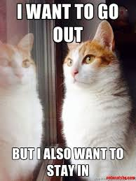 Sarcastic Cat Meme - top 30 funny cat memes quotes and humor