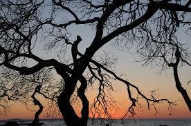 free photo tree back light landscape sunset free image on