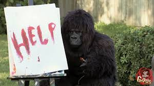 funniest gorilla and mouse pranks best of just for laughs gags