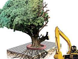 pcmc u0027s green mantra to cut one tree plant 5 more pune news
