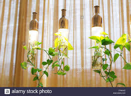 beautiful lights with plants hanging in room stock photo royalty