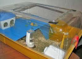 accessori per gabbie criceti sistemazione gabbia e accessori la collina dei conigli