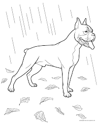 boxer coloring pages latest boston terrier dog coloring page for