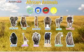 african safari animals african animals video safari android apps on google play