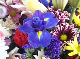 what are good get well flowers proflowers blog