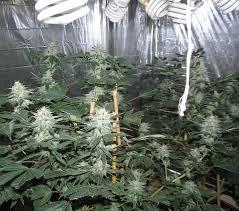 cfl grow lights for indoor plants fluorescent lights fluorescent light for growing weed fluorescent