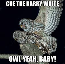 White Owl Meme - cue the barry white owl yeah baby owlpornmeme meme generator