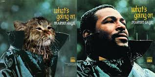 cat photo album classic album covers now with more cats catster