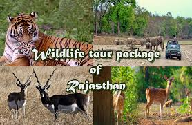 Wildlife tours rajasthan rajasthan wildlife tour packages