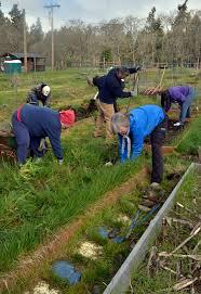 tips for setting up your indoor garden veggie gardener