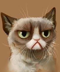 Angry Cat Meme - create meme sad cat sad cat meme sad cat angry cat