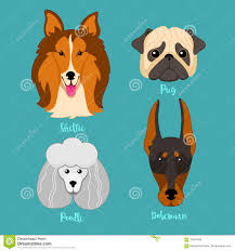 Types Of Dogs Different Breeds Of Puppy Dogs On White Royalty Free Stock Images