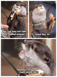 Cuteness Overload Meme - an otter with his stuffed toy otter good day sir cuteness