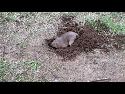 Gopher Meme - put me like is it in between your pee hole