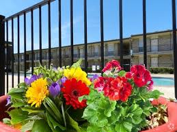 Flowers Killeen Tx - apartments for rent in killeen tx apartments com