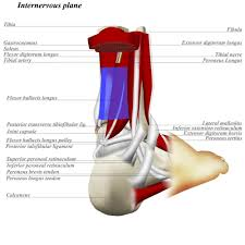 Ankle Anatomy Ligaments Ankle Posterolateral Approach Approaches Orthobullets Com