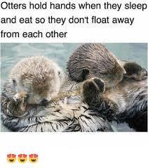 Sea Otter Meme - otter meme i made dis wonderful pictures sleepy baby sea otter takes
