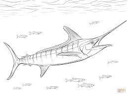 realistic atlantic blue marlin coloring page free printable