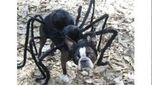 Spider Halloween Costume Dogs Cheap Spider Costume Boys Spider Costume Boys Deals