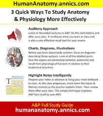 Human Anatomy And Physiology Notes What Are Good Methods For Studying Anatomy For An Anatomy Class