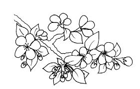 coloriage d u0027une branche de cerisier tête à modeler