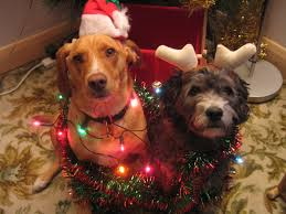 dog christmas cards our last 9 years of dog christmas cards album on imgur